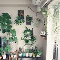お部屋のインテリアに癒しのグリーンを♪『植物』の素敵な飾り方アイデア集