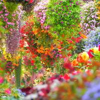 """見て、触れて、癒されよう。一年中楽しめる""""花と鳥の楽園""""「富士花鳥園」"""