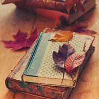 しっとりページを繰りたい。心温まる「秋」がテーマの小説5作品をご紹介します
