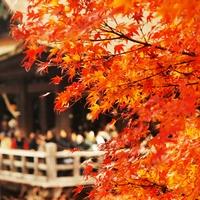 絶景もグルメも♪秋の京都はこれで決まり!《紅葉スポット10選》&《抹茶スイーツ15店》