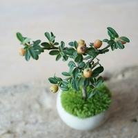 小さな自然をオブジェのように。初心者さんにおすすめの《ミニ盆栽》