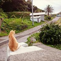 ちいさな島の大きなしあわせ。【猫の島】大分・深島