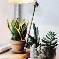 植物も寒がってる??秋冬の「室内観葉植物」のお手入れ方法をおさらい♪