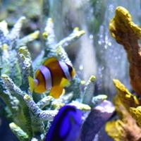関西最大級の水族館!海の生きものたちに出会える「海遊館」へ遊びに行こう