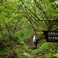 マイナスイオンを浴びて癒される!関東近郊の森林浴スポット7選