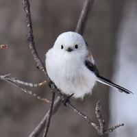 身近な鳥たちと親しくなろう♪新しい趣味 【バードウォッチング】を始めてみない?