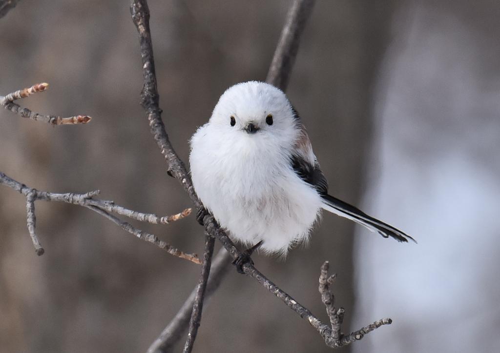 身近な鳥たちと親しくなろう♪新しい趣味 【バードウォッチング】を ...