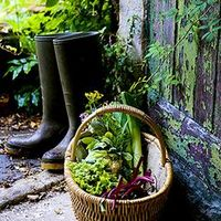 秋冬に始める家庭菜園。畑で、プランターでお野菜づくりをしませんか?