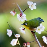 桃色のグラデーションに囲まれて。春の兆しを感じられる奈良県の梅林スポット5選