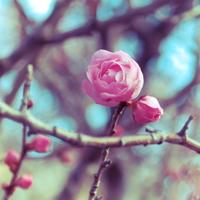 紅梅に、白梅。都心で感じる春の訪れ ~東京都でのおすすめ梅林6選~