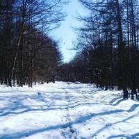 都心から2時間。〈小淵沢〉でグルメ・温泉・アクティビティ大満喫のおすすめ冬の旅