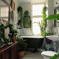 旅行や帰省でしばらく留守に。お部屋の観葉植物はどうする?賢い「水やりの方法」