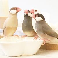 今年は酉年です。キナリノ女子におすすめしたい文鳥のいる暮らし