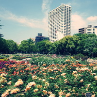 都心のオアシス、大阪・靱公園(うつぼ公園)で癒され美味しいランチを食べよう♪