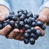ワインセラーが無くても。家庭でのワインの保存方法 をご紹介