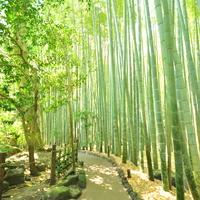 心が洗われるよう。鎌倉の美しき竹林を巡ろう。
