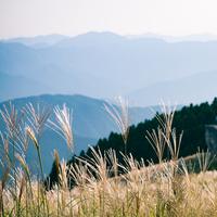 【秋の絶景】癒しの景色を見に行こう♪ ふわふわなびく「すすき」の名所