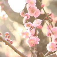 季節の移ろいを美しい日本語で。「七十二候(しちじゅうにこう)」をご存知ですか?