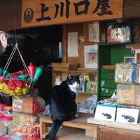 お寺と雑貨に美味しいカフェ。都会の狭間の静かな街「雑司ヶ谷・鬼子母神エリア」