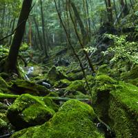 静かで幻想的。死ぬまでに一度は行きたい日本の美しい森3選