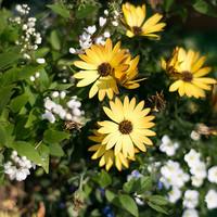 自分だけの小さなお花畑。秋から楽しめるガーデニングの始め方