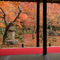 紅葉を見た後は美味しいごはん♪【京都】紅葉&近隣ランチスポット
