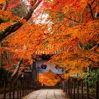 懐かしいあのCM「そうだ 京都、行こう」で紹介された季節の名所【秋冬編】