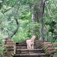 てくてく歩いて自然を満喫しよう。鎌倉のおすすめハイキングコースをご案内♪