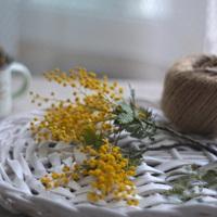 ドライフラワーを作るなら。作りやすいおすすめのお花をまとめたよ♪