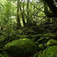 幻想的で美しい苔の森へ。「日本の貴重なコケの森」に選定された苔スポット