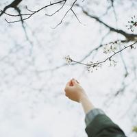 季節のうつろいを言葉で感じてみませんか?四季を織り込んだ、12か月の美しい季語