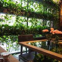 緑のある空間で癒しのティータイム。《都内》植物や庭を楽しめるカフェ8選