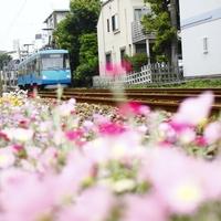 歴史とグルメを堪能!【世田谷線】ぶらり途中下車の旅♪