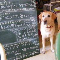 ワンコと一緒に楽しめるお店もあるよ♪ 駒沢公園周辺のお洒落なカフェ5選