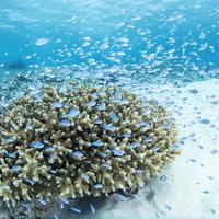 「ケラマブルー」って知ってる?日本の誇る慶良間諸島の海が美しすぎる!