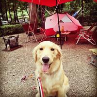 愛犬も一緒にキャンプに行こう♪北関東近郊の「犬に優しいキャンプ場」4選