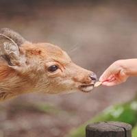 のんびり、ぶらり。「春の奈良旅行」へ出かけませんか?