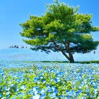 日帰りで癒しのプチトリップを♪ 関東近郊の【花】絶景スポット集めました