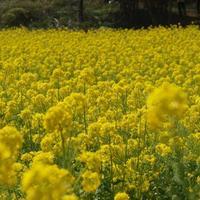 【関東】春を探しに行こう♪初心者さんにおすすめの登山コース3選