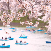 とびきりの春色に包まれよう。個性もさまざま、関東の桜の名所15選