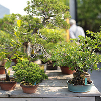 国内外の盆栽ファン必見!GWは埼玉県盆栽町の【大盆栽まつり】に出かけよう♪