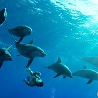 世界遺産、小笠原諸島は東洋のガラパゴスだった。。