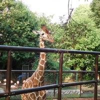 いつもと違う、横浜プラン♪無料動物園にランチ居酒屋【野毛山】のおすすめスポット