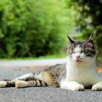 猫好きさんにぜひ行ってほしい♡日本全国の猫に会えるスポット