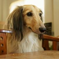 愛犬とカフェでのんびり。【駒沢大学駅周辺】の「犬と一緒に楽しめるカフェ」6選