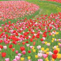 花ざかりの北海道を楽しもう!車で約1時間☆札幌近郊のガーデン&寄り道カフェ5選