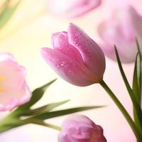 知ればもっと好きになる。春に咲く花と、素敵な花言葉