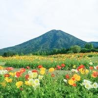 カメラ女子必見!目の前に広がるお花畑にうっとり♪「九州の絶景お花畑スポット」11選