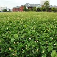 芝生にごろん♪ピクニックにもおすすめ【みなとみらい】の緑ゆたかな公園ガイド