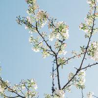 """春の陽気に誘われて、素敵な一歩♪新しい""""何か""""を始めよう"""